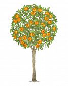 Mandarin tree, hand drawn color illustration.