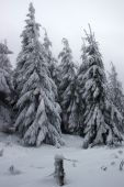 Glade In A Winter Fir Forest Covered With Snow