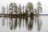 tree line reflections, Round Lake