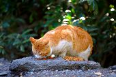 Street cat eating food on rock