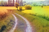 stock photo of rape-field  - Spring rape field - JPG
