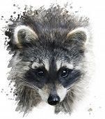 Digital Painting Of Raccoon Portrait