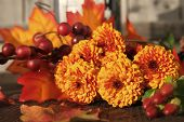 Fall Chrysanthemum Flowers