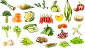 Many Vegetables Isolated On White Background