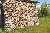 Stack Of Birch Firewood At An Outdoor Site