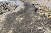 Ancient Peat On Beach Uncovered After Storms 2014.