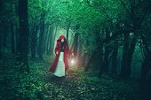 picture of little red riding hood  - Little Red Riding Hood in the woods - JPG