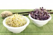 Alfalfa Sprouts And Radish Sprouts