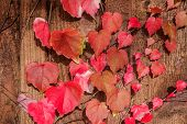 Lovely autumn leaves