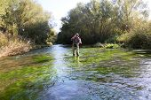 Fly fisherman fishing in low water river