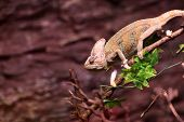 image of terrarium  - Green basilisk on a tree branch at terrarium - JPG