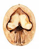 Walnut Isolated