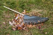 Leaf Rake And Leaf Pile