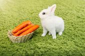 stock photo of cony  - Funny baby white rabbit with a carrot in velour grass - JPG