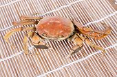stock photo of cooked crab  - Cooked crab - JPG