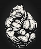 stock photo of pitbull  - Vector illustration of a strong  pitbull with big biceps - JPG
