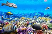 stock photo of shoal fish  - Wonderful and beautiful underwater world with corals and tropical fish.
