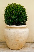 stock photo of pot plant  - plant in big ceramic pot on a background of wall - JPG