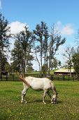 picture of arabian horse  - A charming country estate - JPG