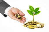 stock photo of golden coin  - Hand of a businessman giving coins to a tree growing on golden coins - JPG