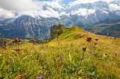Hiking Path Along Ridge And Through Alpine Meadows