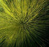 Grass Tree Detail