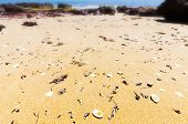 stock photo of deserted island  - Shells on the sand at Red Rocks Beach - JPG