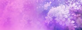 picture of soulmate  - Wide soft focus website header background with delicate pink apple blossom on right hand side and plenty of copy space on left - JPG