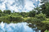 stock photo of wetland  - Wetlands in Pantanal - JPG