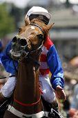 Horserace Horse