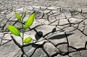 stock photo of drought  - small plant in cracked growth - JPG
