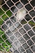 foto of rabbit hutch  - rabbit in cage close up - JPG