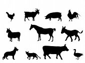 picture of farm animals  - various farm domestic animals silhouettes on white background - JPG