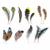 Realistic Bird Feathers. Detailed Colorful Feather Of Different Birds. 3d Vector Collection Isolated poster