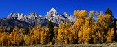 Panorama: Grand Teton With Autumn Golden Aspens,
