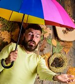 Fall Atmosphere Attributes. Man Bearded Lay On Wooden Background With Orange Leaves Top View. Hipste poster