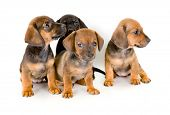Group of adorable puppies, isolated on white