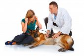 stock photo of young girls  - Young girl and a vet examining her dog isolated on white - JPG