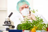 picture of genetic engineering  - Researcher holding up a GMO vegetable - JPG