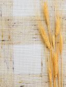 Wheat on background