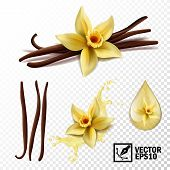 Realistic Vector Set Of Isolated Elements (vanilla Flower And Pods Or Sticks, Vanilla Splash And Dro poster