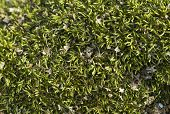 Green Moss, Close-up, Top View, Texture poster