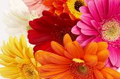 stock photo of flower arrangement  - close - JPG