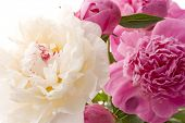 picture of flower arrangement  - close up of beautiful  spring flowers - JPG