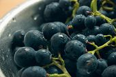 Fresh Grapes Food Closeup. Healthy Food. Vegetarian Food. Nutritious Food. Plate Of Black Grapes. Fo poster