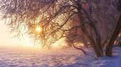 Winter Scene In Sunshine. Snowy Nature. Vibrant Landscape Of Frosty Winter In Pink Sunlight. Merry C poster