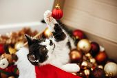 Cute Kitty Playing With Red And Gold Baubles In Box, Ornaments And Santa Hat Under Christmas Tree In poster