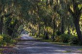 Bonaventure Cemetery, Savannah