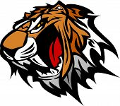 Tiger Mascot Vector Graphic Illustration