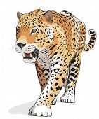 Jaguar, wild cat Panther. Vector illustration, White background, shadow. Photos of jaguars in portfo